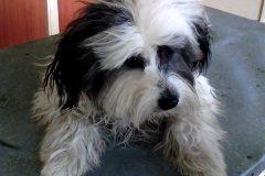 Aniworld-Black-White-Dog