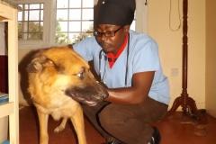 Aniworld-Veterinary-Clinic-001