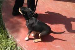 Aniworld-Veterinary-Clinic-003